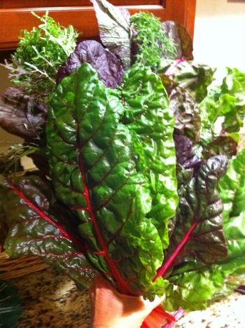 greens (swiss chard)